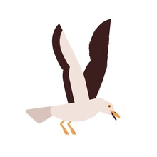 Simple Style Colorful Portrait Of Flying Seagull Isolated On White Background. Beautiful Marine Nordic Bird. Flat Vector Cartoon Illustration Of Adorable Arctic Seabird