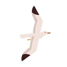 Adorable Portrait Of Flying Seagull. Simple Style Soaring Nordic Seabird Isolated On White Background. Colorful Flat Vector Cartoon Illustration Of Beautiful Arctic Sea Bird