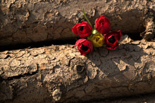 Closeup Shot Of Four Red And One Yellow Tulips Between Wooden Logs