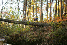 Young Child Playing On Broken Tree High Above River In Woods