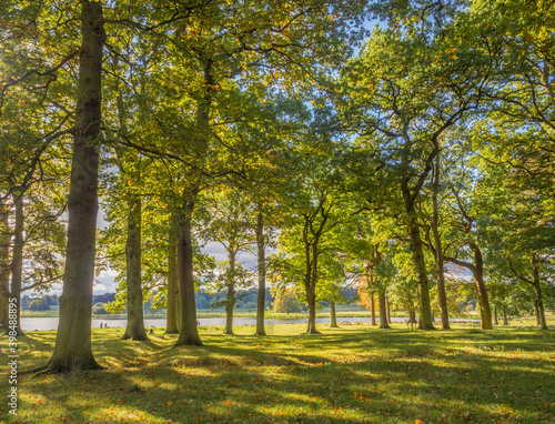 Early autumn colour on trees at Tatton Park, Knutsford, Cheshire, UK Wallpaper Mural