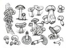 Mushrooms Mushroom Menu .Graphic Illustration Hand Drawn. Seamless Pattern. Engraving, Doodle, Sketch, Retro, Vintage. Separate Elements On The Background. Edible Mushrooms, Boletus, Chanterelles