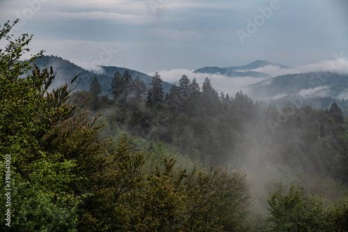 drzewa-we-mgle-bieszczady