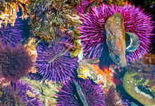 Closeup Of Tidepools On Oregon Coast