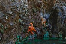 Tidal Pools And Sea Animals Along Oregon Coast At Low Tide