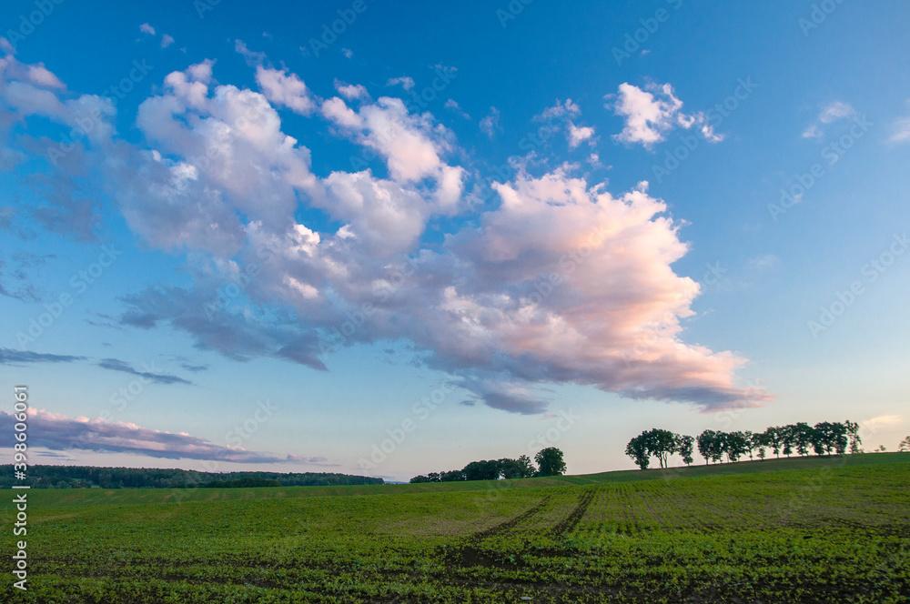 Fototapeta Wiosenny pejzaż z drzewami, chmurami i łąką.  Spring landscape with trees, clouds and a meadow.