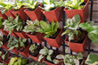 Small plant pots at wall mounted for vertical garden
