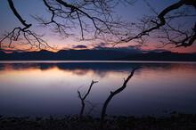 黄昏の湖。湖畔の木の枝のシルエット。