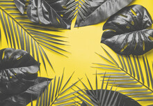 Tropical Palm Leaves With Fre Space, Text Box. Flat Lay, Nature Concept, Mockup. Color 2021 Illuminating And Ultimate Gray.