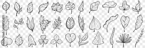 Fototapety, obrazy: Leaves doodle set. Collection of hand drawn beautiful fallen leaves of different shapes and forms isolated on transparent background. Illustration of nature plant and trees leaves variation