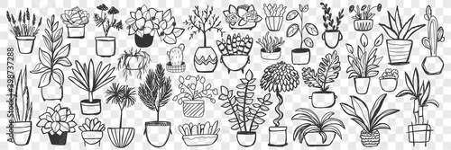 Fototapeta Plants in pots doodle set. Collection of hand drawn homegrown plants and flowers in pots for decoration isolated on transparent background. Illustration of natural botany floral indoor lifestyle  obraz