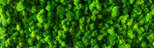 Fotografie, Obraz decorative moss for interior decoration