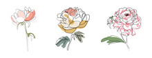 Set Of Three Flowers In One Line Art Drawing Style. Vector Illustration. Simple Art. Trendy Peonies And Roses For Logo, Poster, Blog, Banner And Simple Design