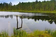 The Forest River Is Blocked By An Artificial Dam. A Small Lake Was Formed From The Flood. The Ecological Balance Is Disturbed By Man. Northern Forests, Taiga