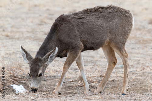 Photo Colorado Wildlife