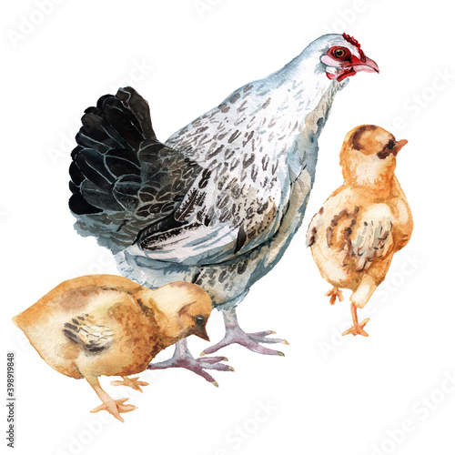 Canvastavla Watercolor image of hen and two chickens.