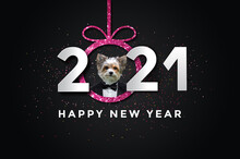Happy New Year 2021 With A Dog, Biewer Yorkshire.