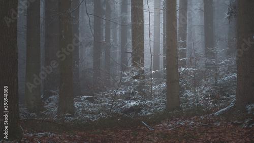 tajemniczy-zimowy-las-we-mgle
