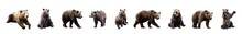 Set Of Brown Bears Over White Background. Large Collection Of Dangerous Predators Of Grizzly Bears.