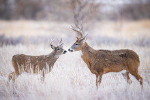 Two Bucks - Small And Large