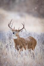 Sniff Test Buck