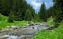 Latorita River Flowing Downhill Through An Alpine Grassland In A Cloudy Stormy Day In  Capatanii Mountains. Fir Trees Complete The Scenery.