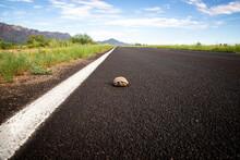 Ornate Box Turtle In Long Roadway In Arizona Desert