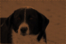 Portrait Of A Dog, Border Collie  Dog Portrait In The Farm  Vector Halftone Dotted Grunge Texture