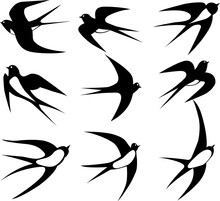 Various Swallow Birds Flying Silhouette