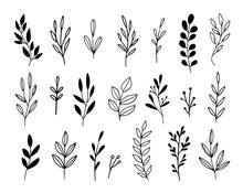 Vector Branches And Leaves. Hand Drawn Floral Elements In Loose Doodle Style. Ink Vintage Botanical Illustrations.