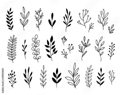 Obraz na płótnie Vector branches and leaves