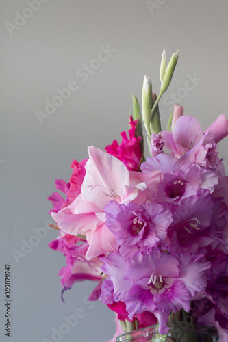 Fototapeta Pink Gladiolus flower bouquet in glass vase obraz na płótnie