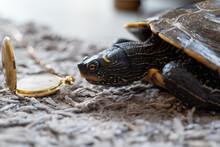 Schildkröte Mit Uhr