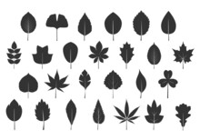 A Set Of Grey Various Leaves. Vector Icon. Vector Illustration. Plant In Garden.