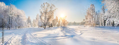 Fototapeta Beautiful winter forest on a sunny day obraz