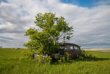 Abandoned Car With A Tree Growing Where The Motor Previously Was Located