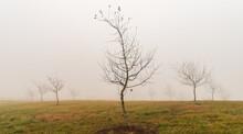 Misty Morning In The Field