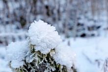 Winter Forest, Snow Covered Old Tree Stump With Moss. Nature After Snowfall, Cold Weather