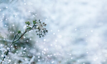 Beautiful Winter Background Of Grass And Plants Covered With Ice After Freezing Rain With Copy Space