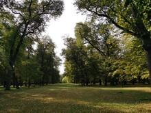 Linden Alley, Early Autumn. Park