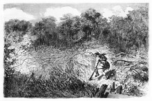 French Explorer M. Biard Lurking With Guns Behind Branches Hedge In Rio Negro Rainforest, Brazil. Ancient Grey Tone Etching Style Art By Riou, Biard And Minne, Le Tour Du Monde, 1861