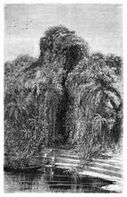 Entrance To Jungle With Strong Barrier Of Tangled Vegetation From River Shore Of Rio Negro Bank Brazil. Ancient Grey Tone Etching Style Art By Riou, Biard And Minne, Le Tour Du Monde, 1861