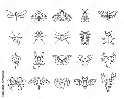 Fotografía Outline icon set of mystic animals and insects