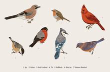 Winter Birds. Set. Tit, Robin, Jay, Blue Jay, Bullfinch, Bluebird, Red Cardinal. Vector Vintage Illustration. Colorful