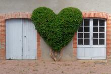 Haie Coeur