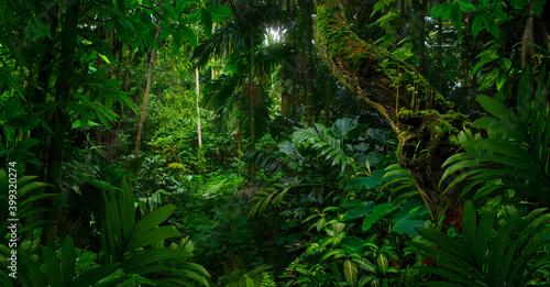 Tropical jungles of Southeast Asia in august - fototapety na wymiar