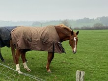 Horse In Field With Winter Coat On