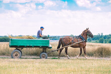 A Horse Pulls An Old Cart. Unusual Mode Of Transport.