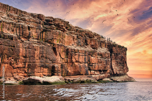 Fotografering Largest single colony of northern gannets in the world on bonaventure island nea