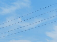 Birds Lined Up In A Perfect Row Like Little Music Notes Of Joy On A Line